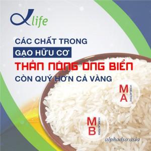 Phát hiện loại gạo Việt chứa 2 hợp chất giúp chống lại các căn bệnh béo phì, bệnh tiểu đường